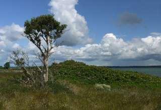Lyø ist eine der Ostseeinsel die zur Dänischen Südsee gehören