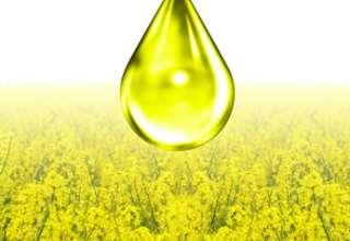 Ein Rapsöl-Bild als Beispiel für ein Pflanzenöl